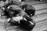 cuccioli _10