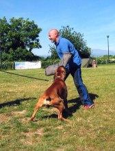 Hooch e Giulio addestramento