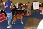 GAREXIUM CHIMERA EXC CL. GIOVANI FEMMINE FULVE EUROPEAN DOG SHOW GINEVRA