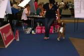 GAREXIUM CRISTINA 4 EXC CL. GIOVANI FEMMINE FULVE EUROPEAN DOG SHOW GINEVRA