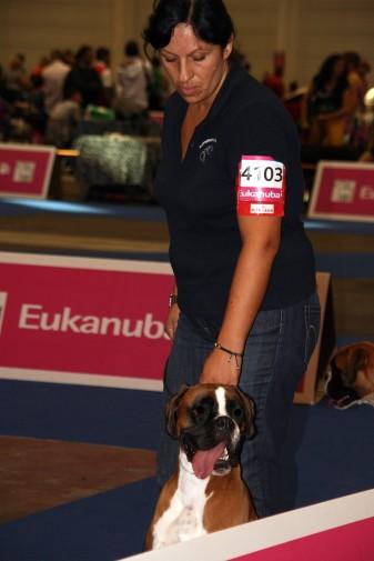 GAREXIUM CRISTINA 4° EXC CL. GIOVANI FEMMINE FULVE EUROPEAN DOG SHOW GINEVRA