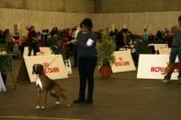Garexium Chimera Internazionale di Friburgo (CH)