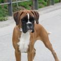Garexium Ginevra Camilla - 4,5 mesi