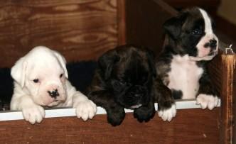 cuccioli I